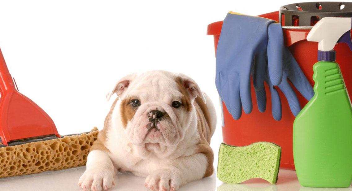 почистване на миризми от домашни любимци