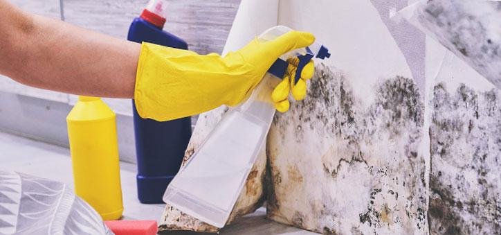 Почистване на мухъл