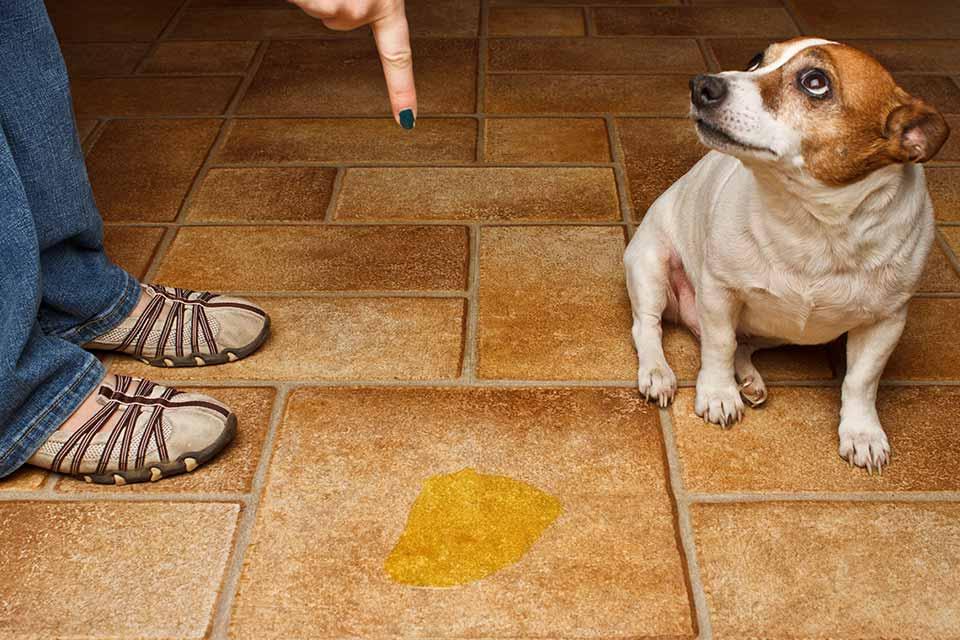 миризма от кучешка урина