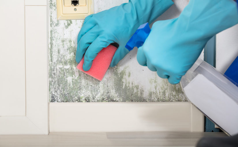 почистване на дома от мухъл