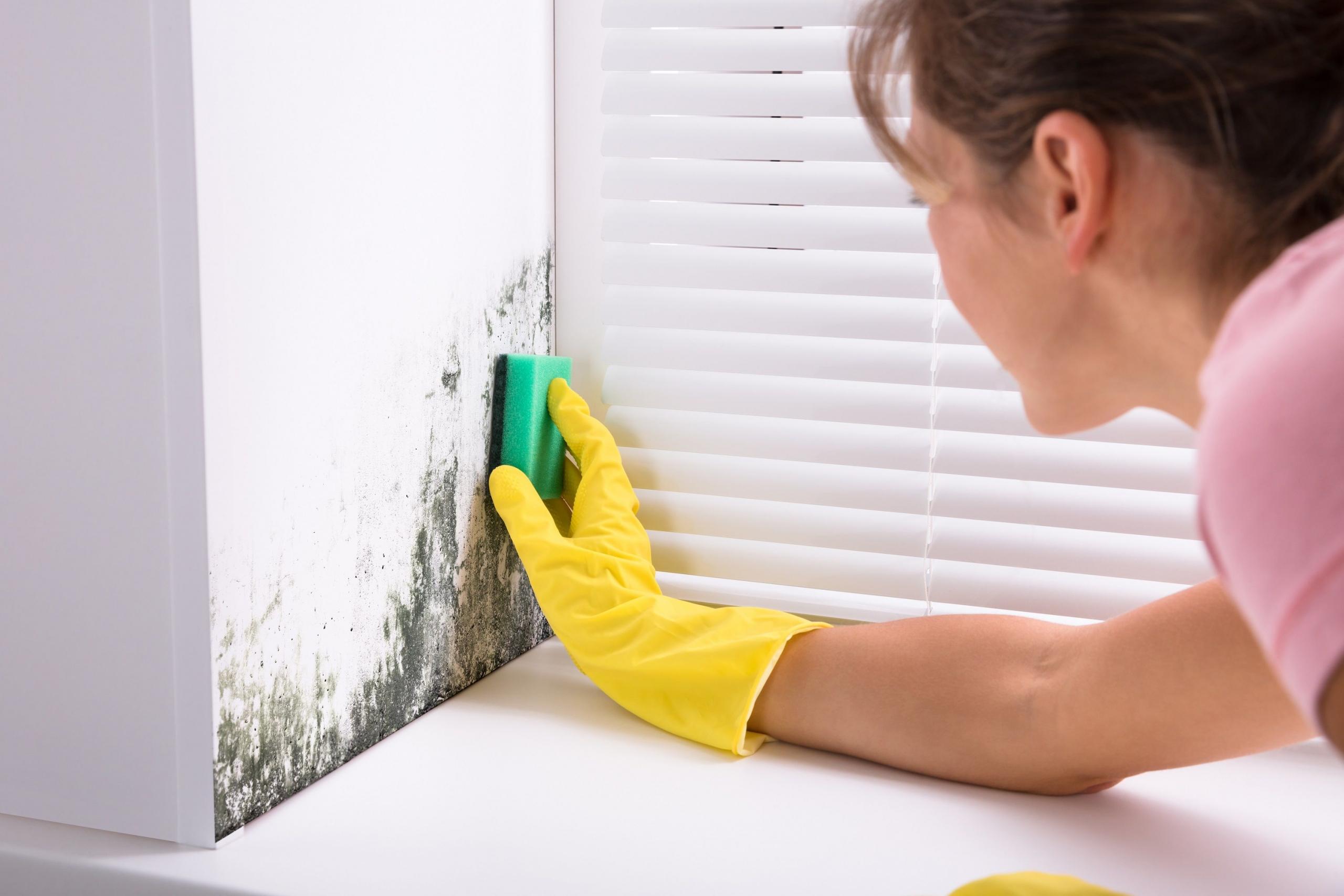 Как да почистваме мухъла от дома